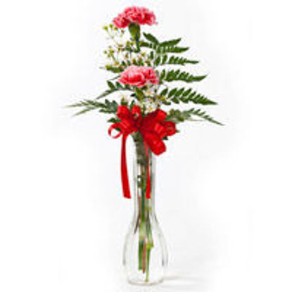 Picture of 2 carnations in a vase