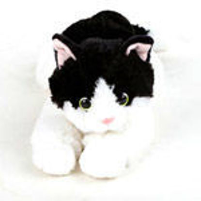 Picture of Black/White Cat Aurora
