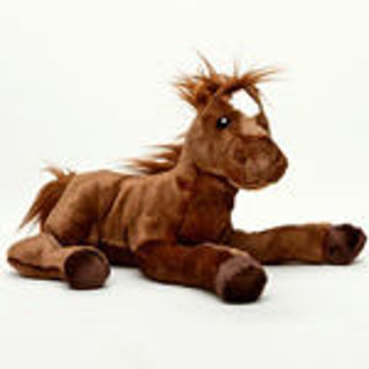 Picture of Douglas Pony