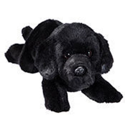Picture of Black Lab