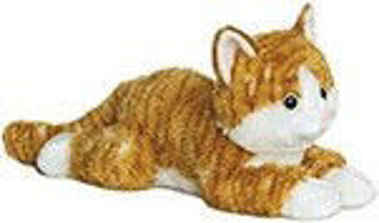 Picture of Chester the Tabby Cat